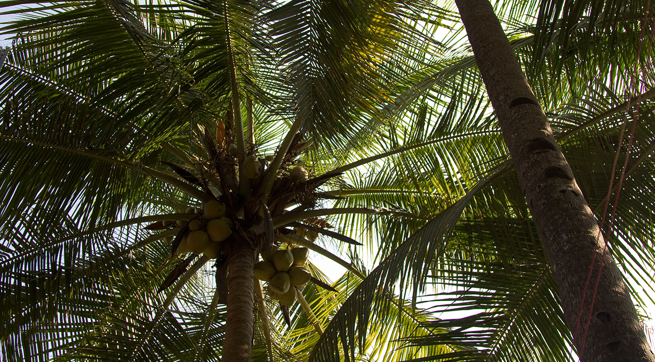 Under the palm